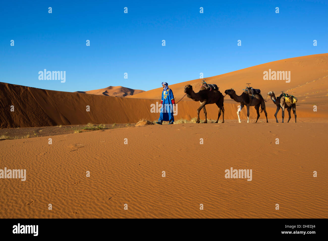 Moroccan camel driver, Dunes of Erg Chebbi, Merzouga, Meknes-Tafilalet, Morocco, North Africa, Africa - Stock Image