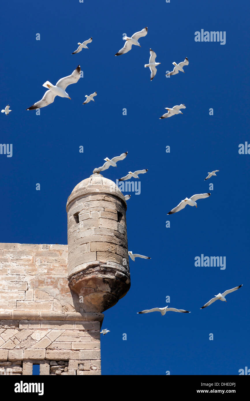 Seagulls flying above turret of the old fort, Essaouira, Atlantic coast, Morocco, North Africa, Africa - Stock Image