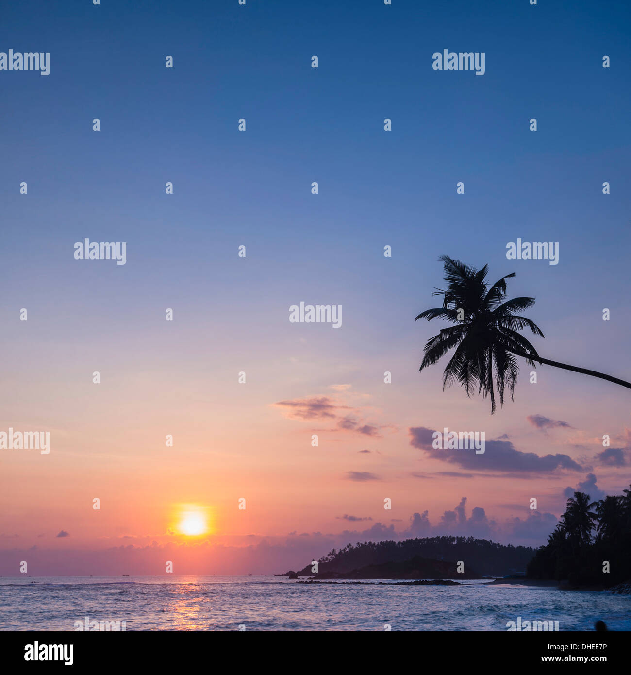 Palm tree at sunset on tropical Mirissa Beach, South Coast of Sri Lanka, Southern Province, Sri Lanka, Asia Stock Photo
