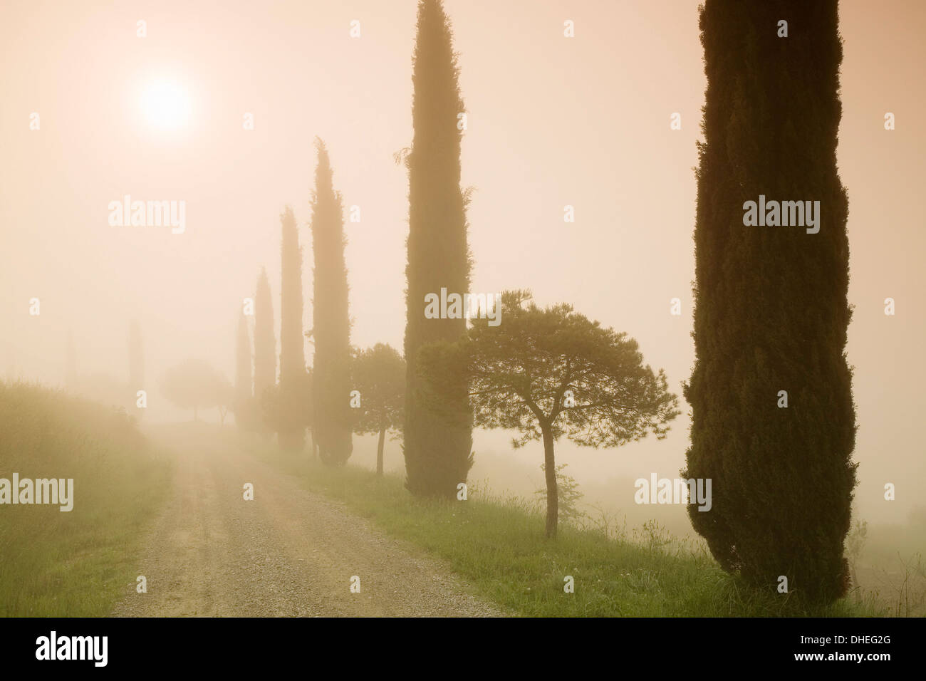 Cypress trees in the early morning fog, Val d'Orcia, UNESCO World Heritage Site, Province Siena, Tuscany, Italy, Stock Photo