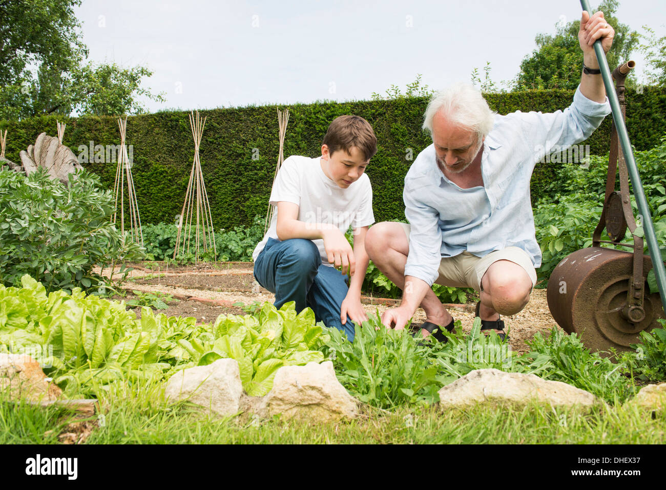 Grandfather and grandson gardening - Stock Image