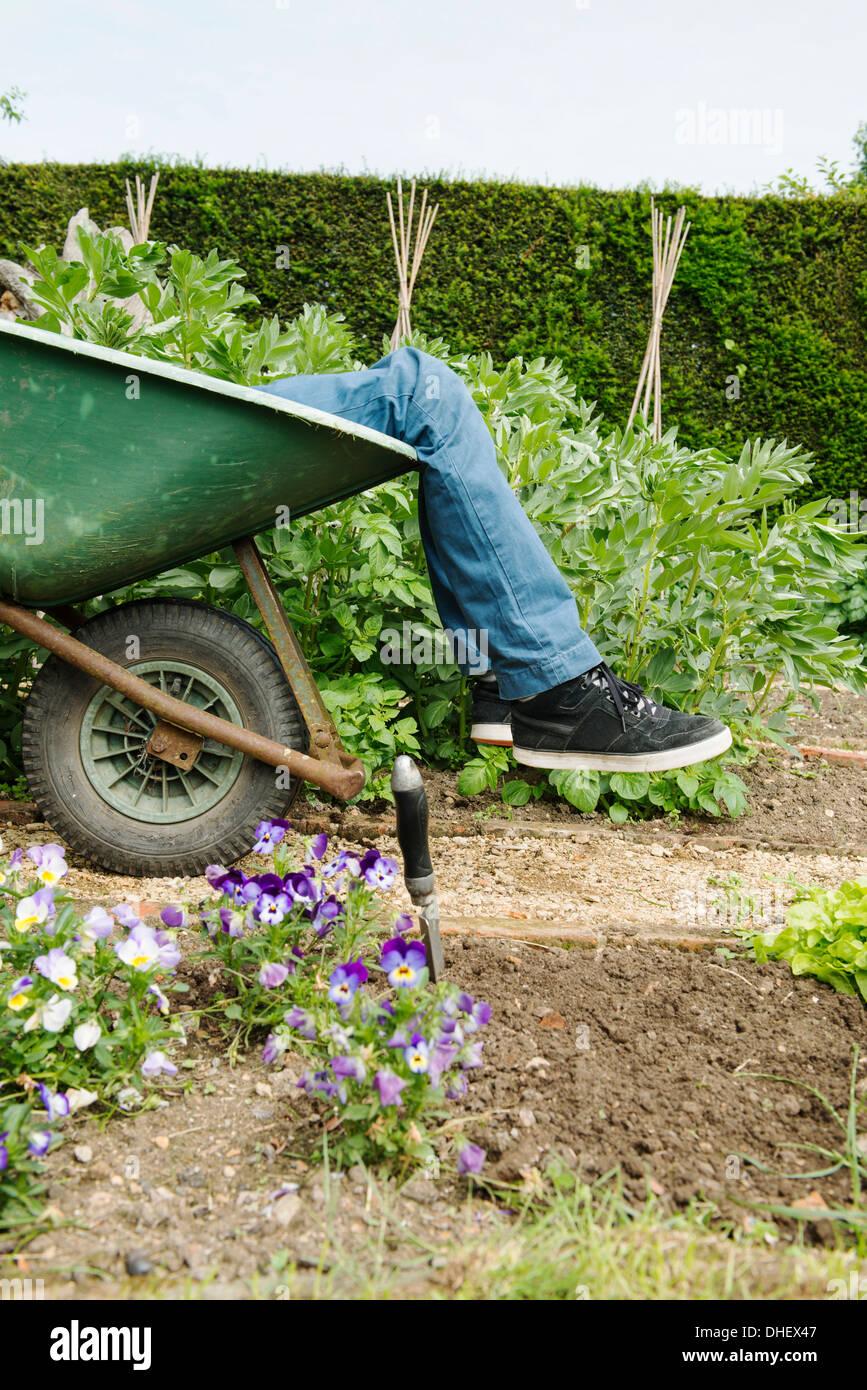 Teenage boy leg's in wheelbarrow - Stock Image
