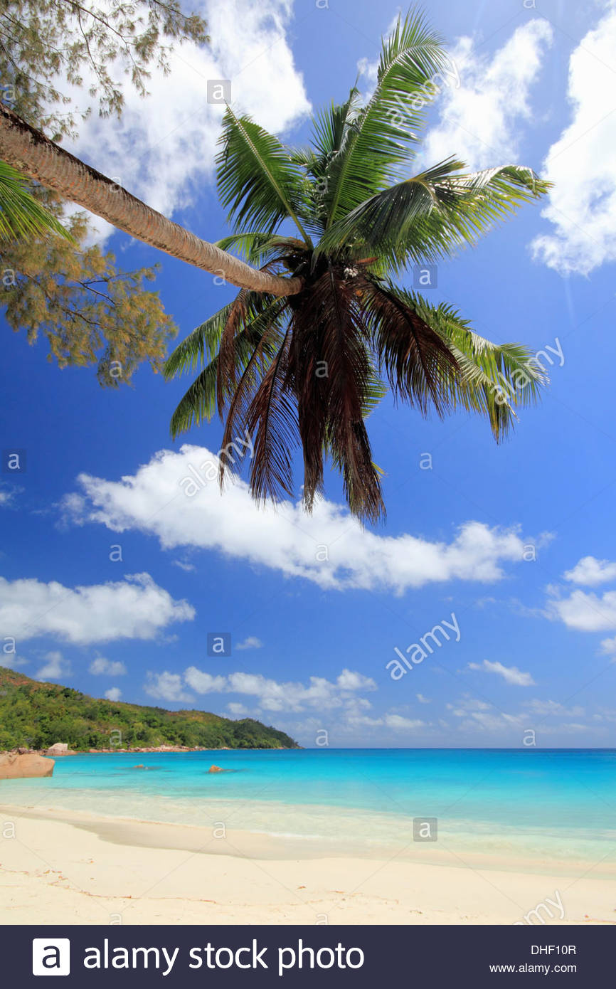 Palm tree and beach, Praslin Island, Seychelles - Stock Image