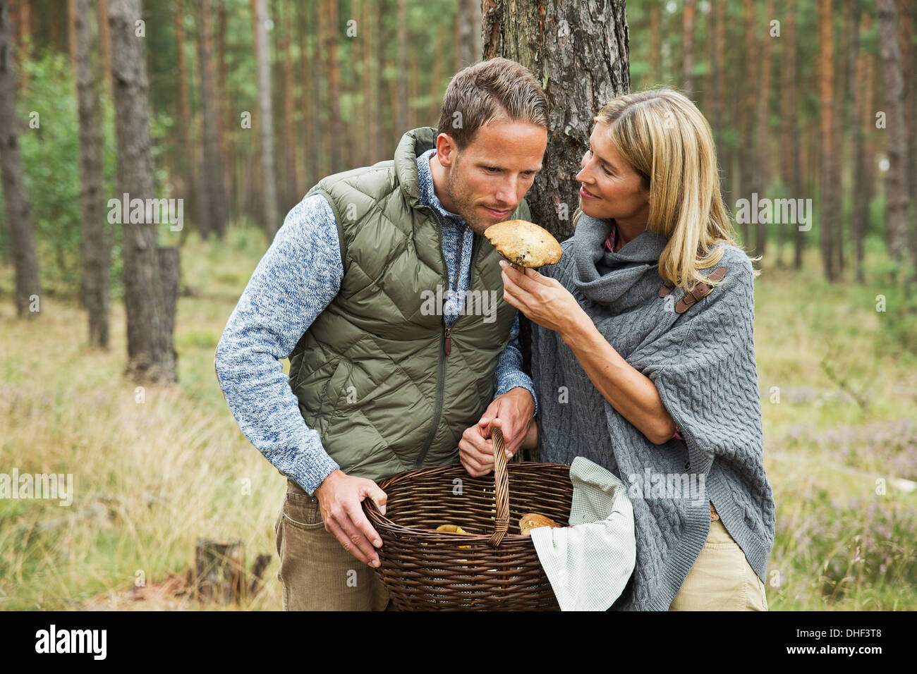 Mid adult couple foraging for mushrooms in forest - Stock Image