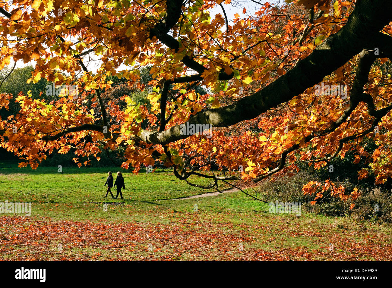 Autumnal scene, Hampstead heath, view from under tree bow, with autumn leaves  two people walk along path in park - Stock Image