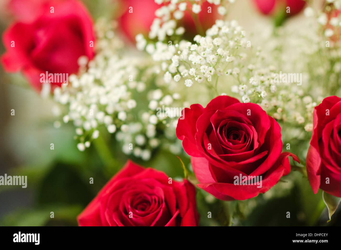 Red Roses Babys Breath Stock Photos Amp Red Roses Babys
