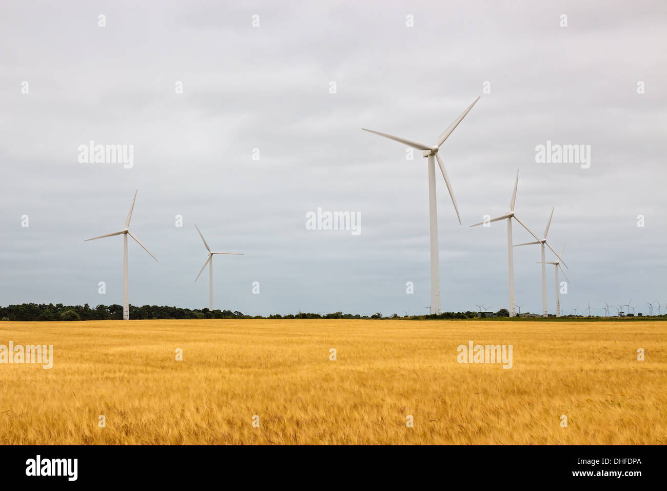 Wind turbines in a yellow field, source of alternative energy. - Stock Image