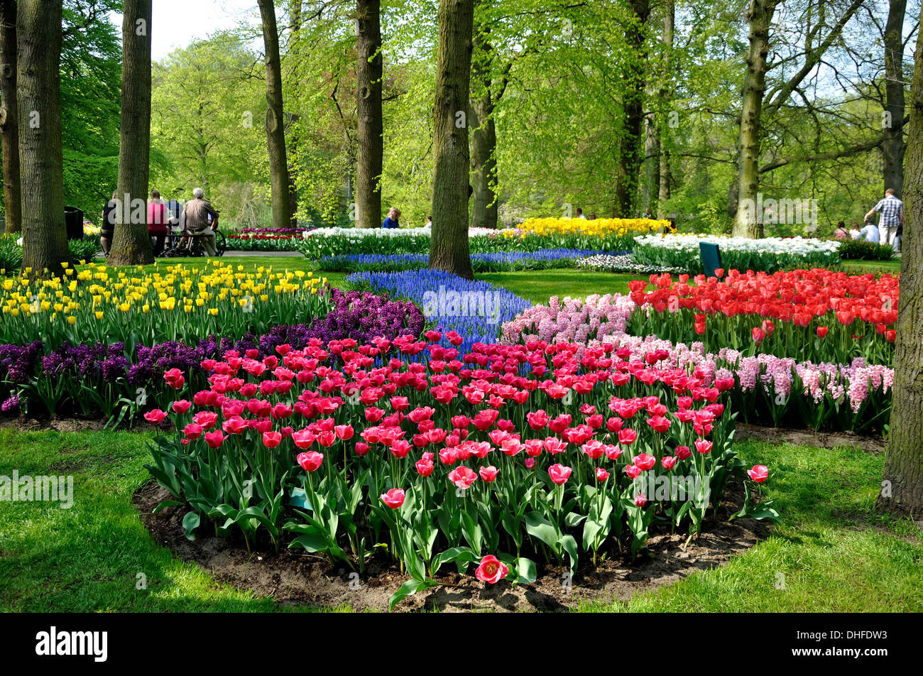 Purple, yellow, blue, pink and white tulips in Keukenhof park in Holland Stock Photo