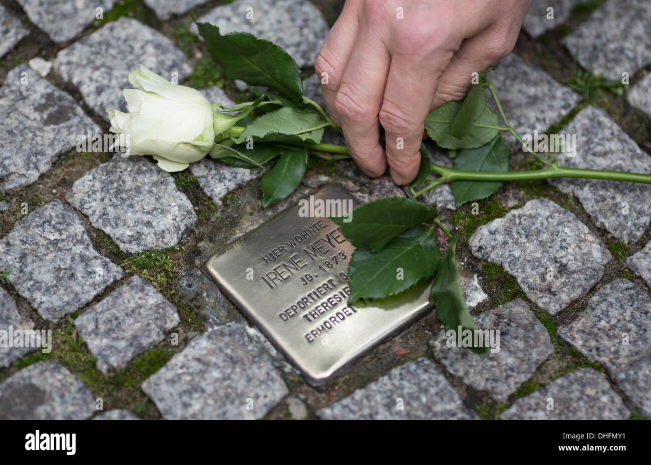 Berlin, Germany. 09th Nov, 2013. A man puts down a rose next to a tripping stone during a walkabout in reminiscence of the Jewish Nazi victims in Berlin, Germany, 09 November 2013. Photo: FLORIAN SCHUH/dpa/Alamy Live News - Stock Image