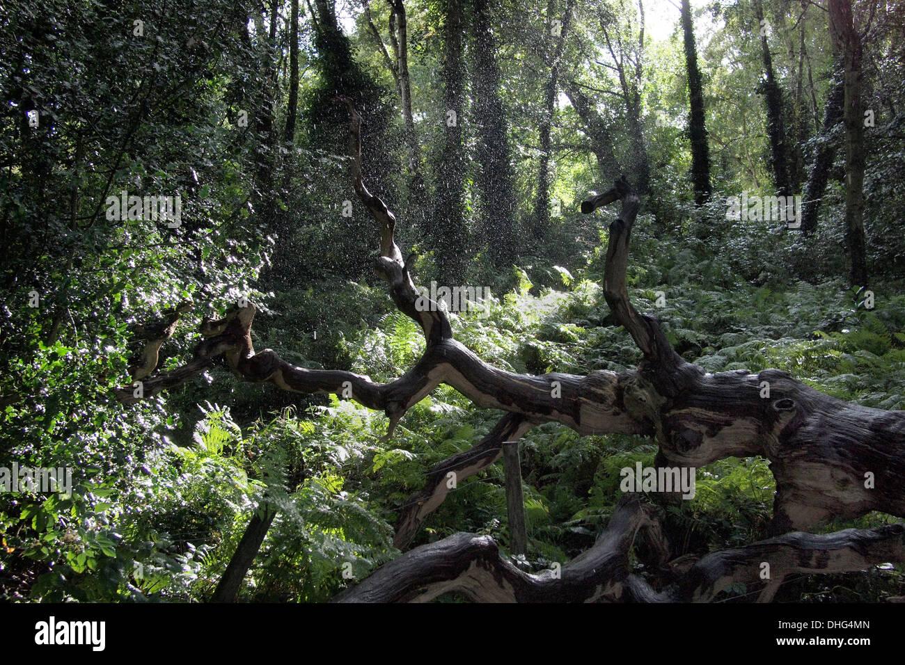 Sun and rain in woods on Hampstead Heath London UK - Stock Image
