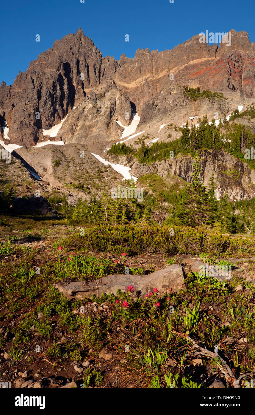 Paintbrush blooming among heather in Upper Canyon Creek Meadow at base of Three Fingered Jack in the Mount Jefferson Stock Photo