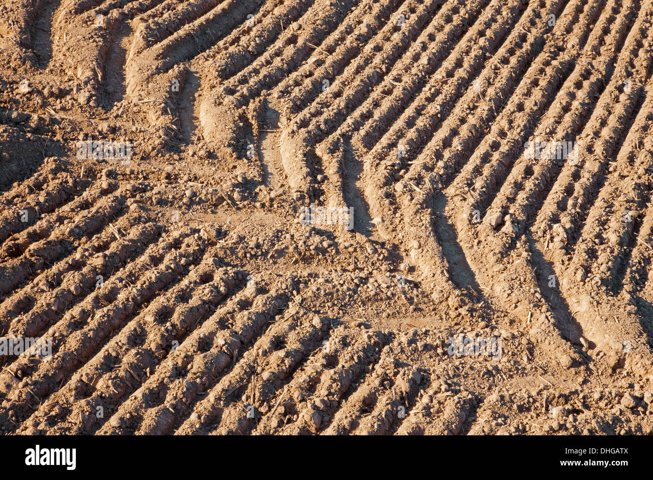 track of tractor on the field - Stock Image