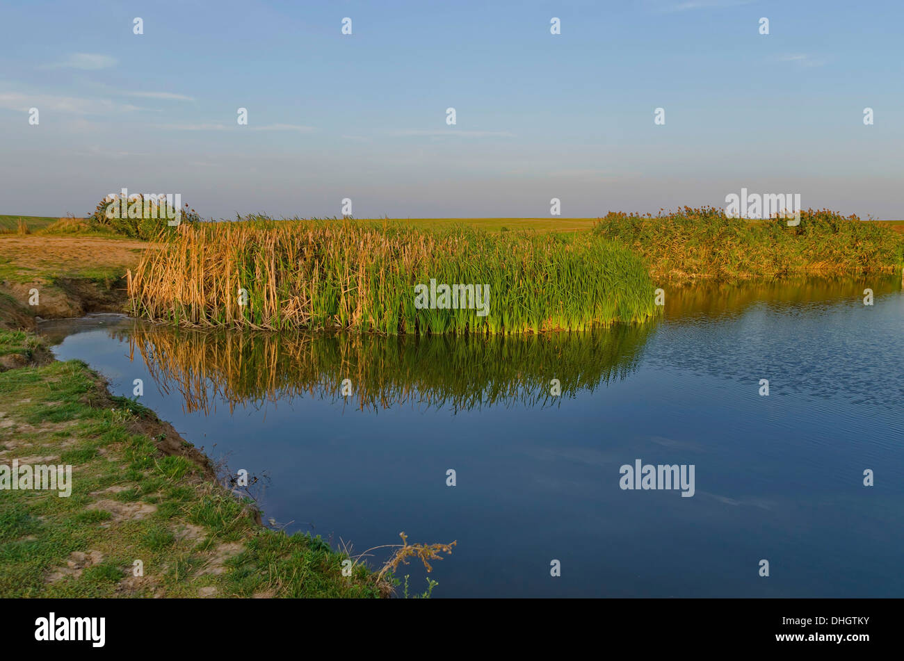 Small pond in the field for irrigation - Stock Image