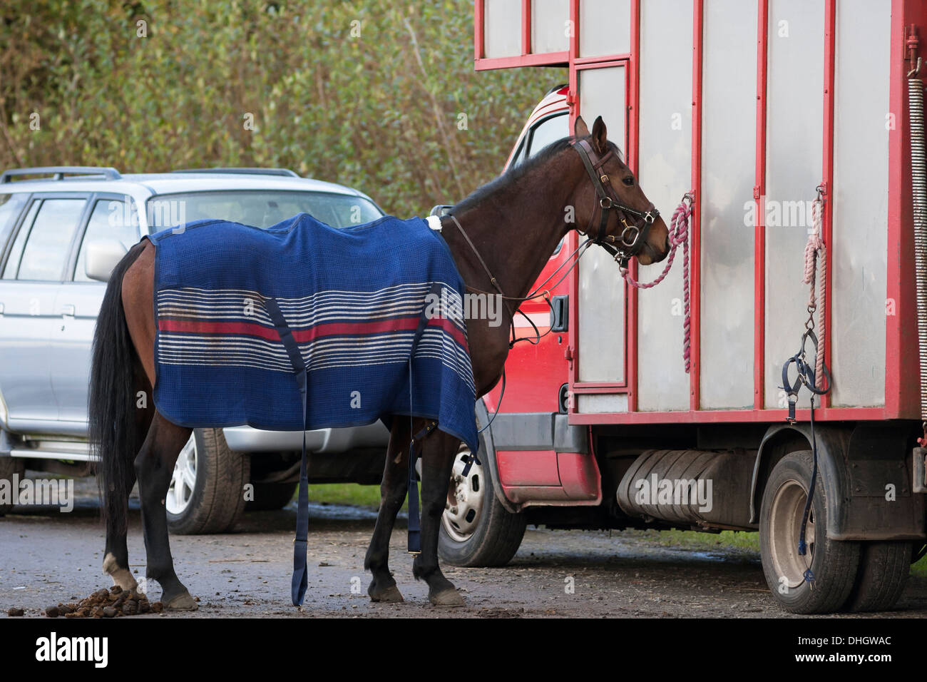 Horse tied to horse box with blanket - Stock Image