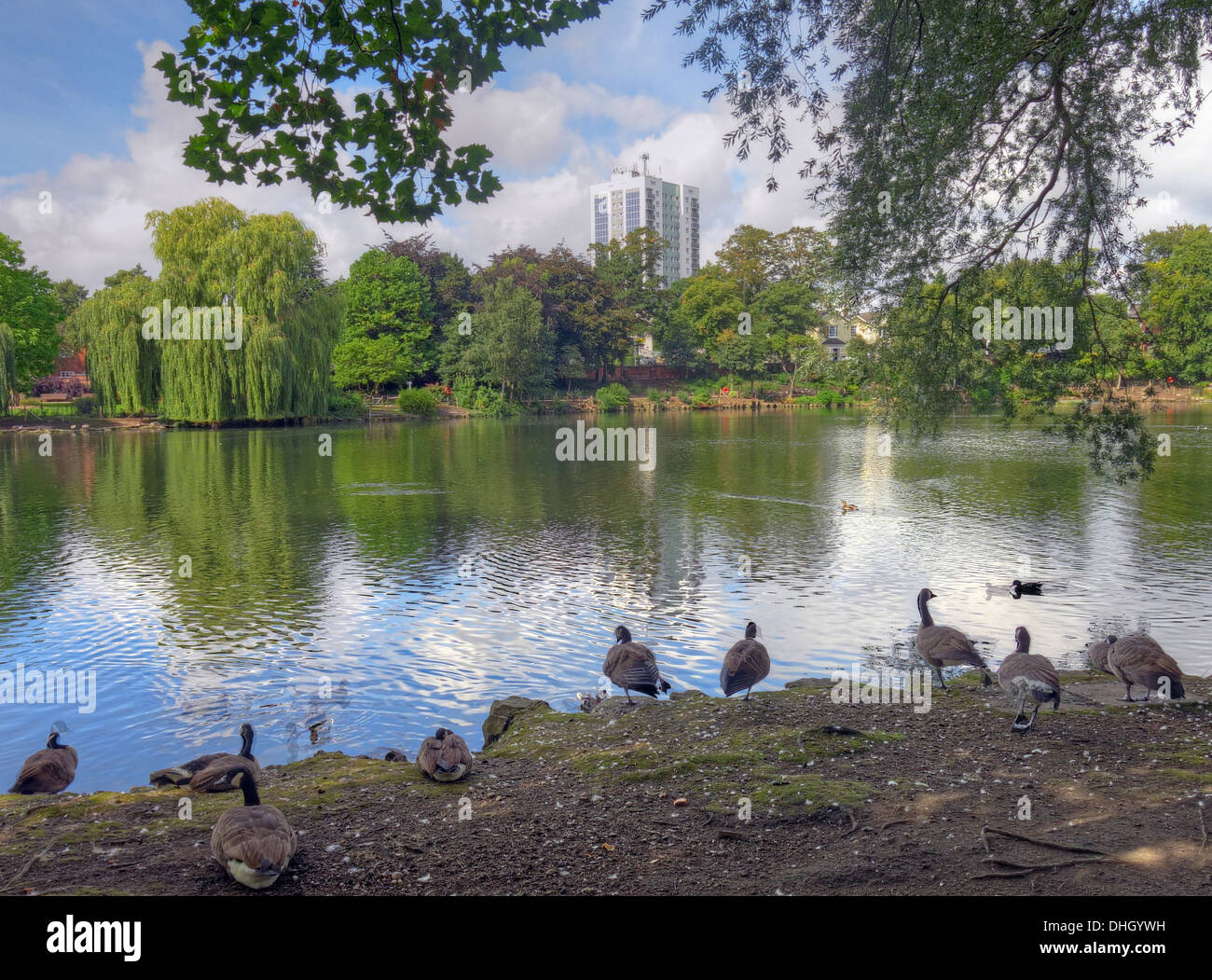 Walsall town Arboretum park pond , West Midlands England , UK - Stock Image