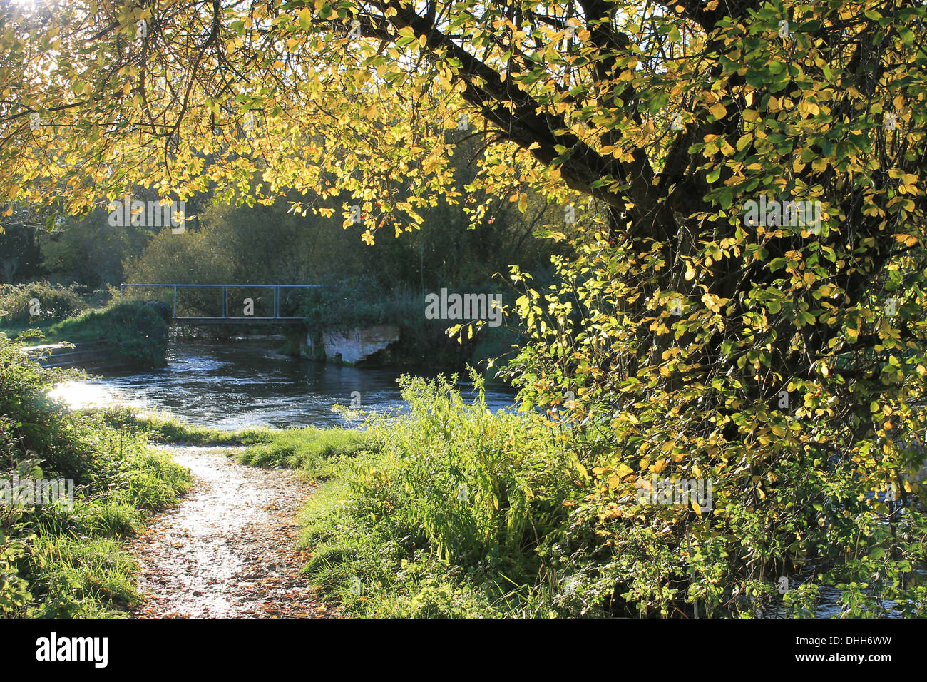 Golden leaves of autumn on the banks of the Itchen Navigation near Twyford, Hampshire, UK - Stock Image