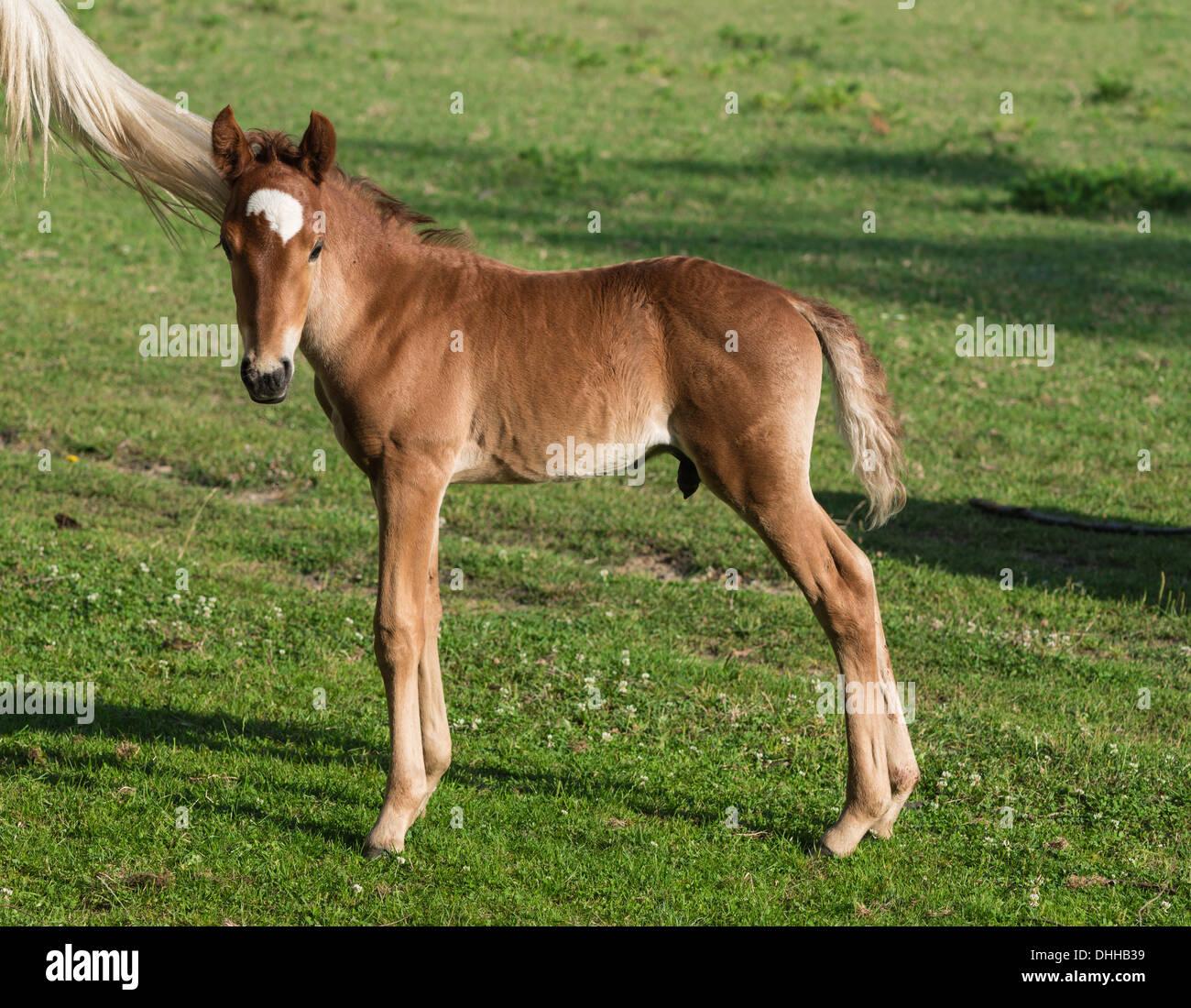 Baby Horse Stock Photo Alamy