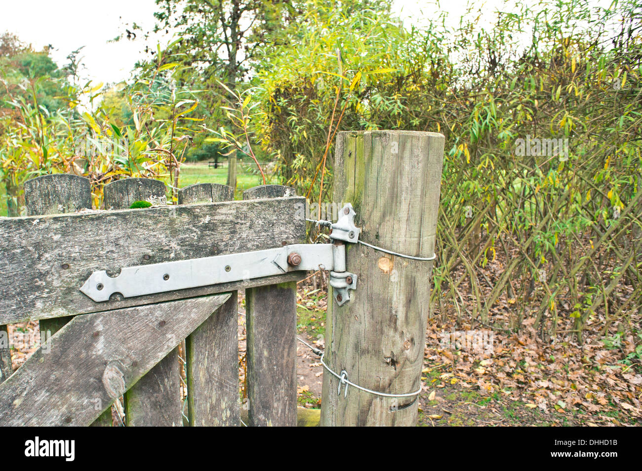 Old gate in a rural woodland setting - Stock Image