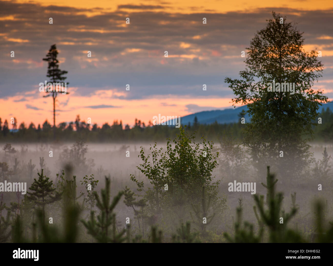 Mist and trees at sunset, Storforsen, Lapland, Sweden - Stock Image