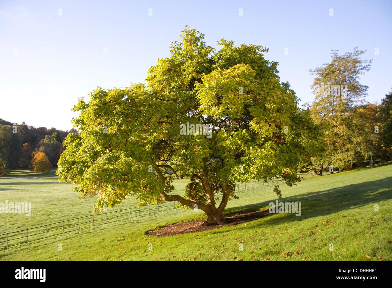 Autumn trees landscape scene on Hampstead Heath - Stock Image