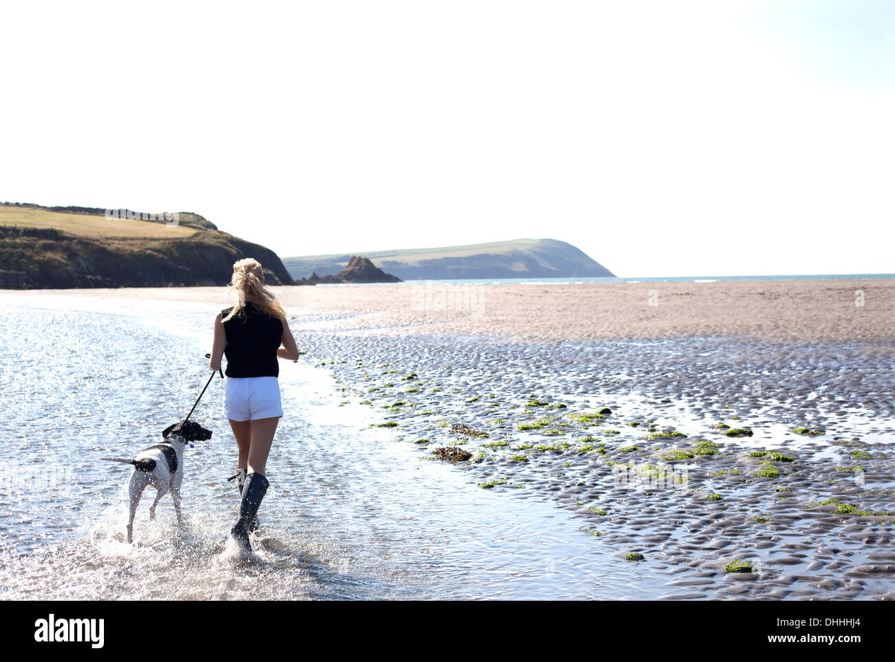 Woman walking dog on beach, Wales, UK - Stock Image