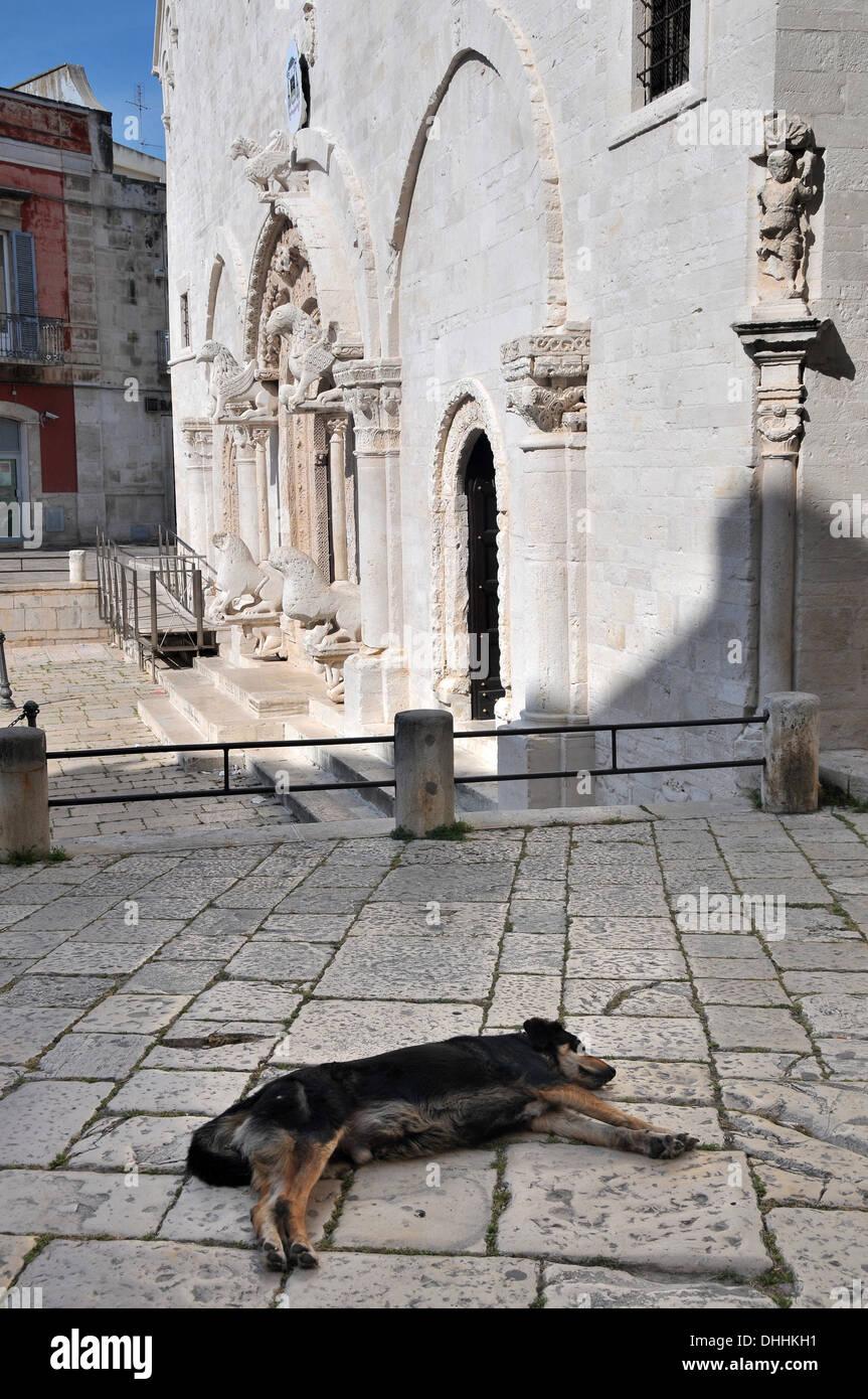 Dog asleep at the Cathedral of Ruvo di Puglia, Apulia, Italy - Stock Image