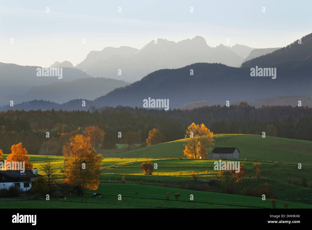 Autumn morning in the foothills of the Alps, view from Mt Aidlinger Hoehe, Aidling, Riegsee, Pfaffenwinkel region, Upper Bavaria - Stock Image