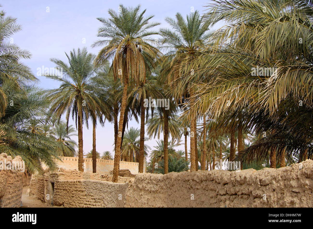 Palm garden in the oasis town of Ghadames, UNESCO world heritage ...