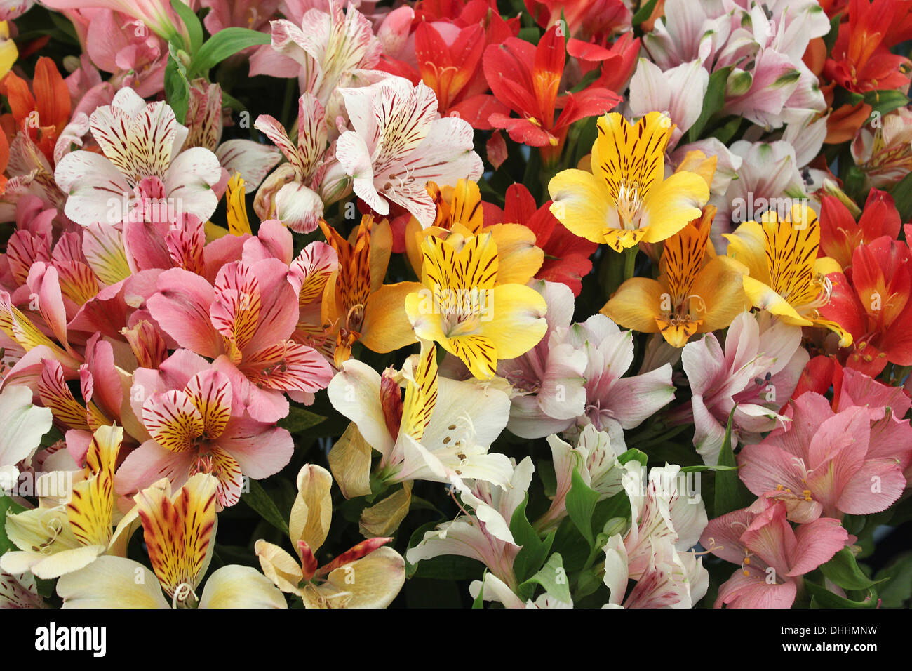 Multi Colored Flowers display - Stock Image