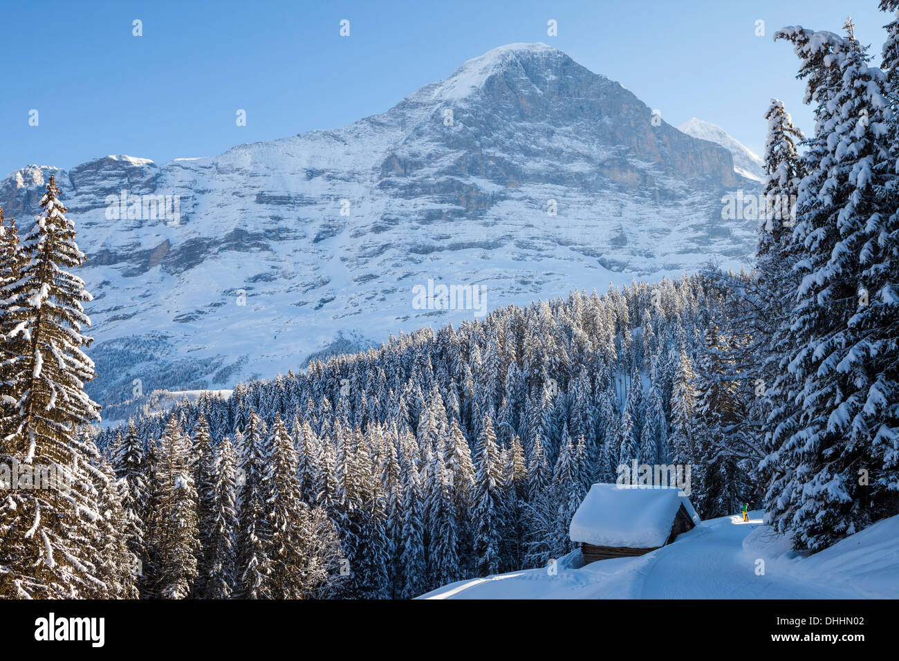 Snowshoe Trekking with dog and deep snowed in alpine cottage, in the background Eiger North Wall above Grindelwald, Jungfrauregi - Stock Image