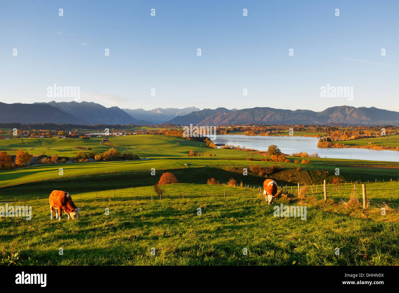 Riegsee Lake, view from Mt Aidlinger Hoehe, foothills of the Alps, Aidling, Riegsee, Pfaffenwinkel region, Upper Bavaria - Stock Image