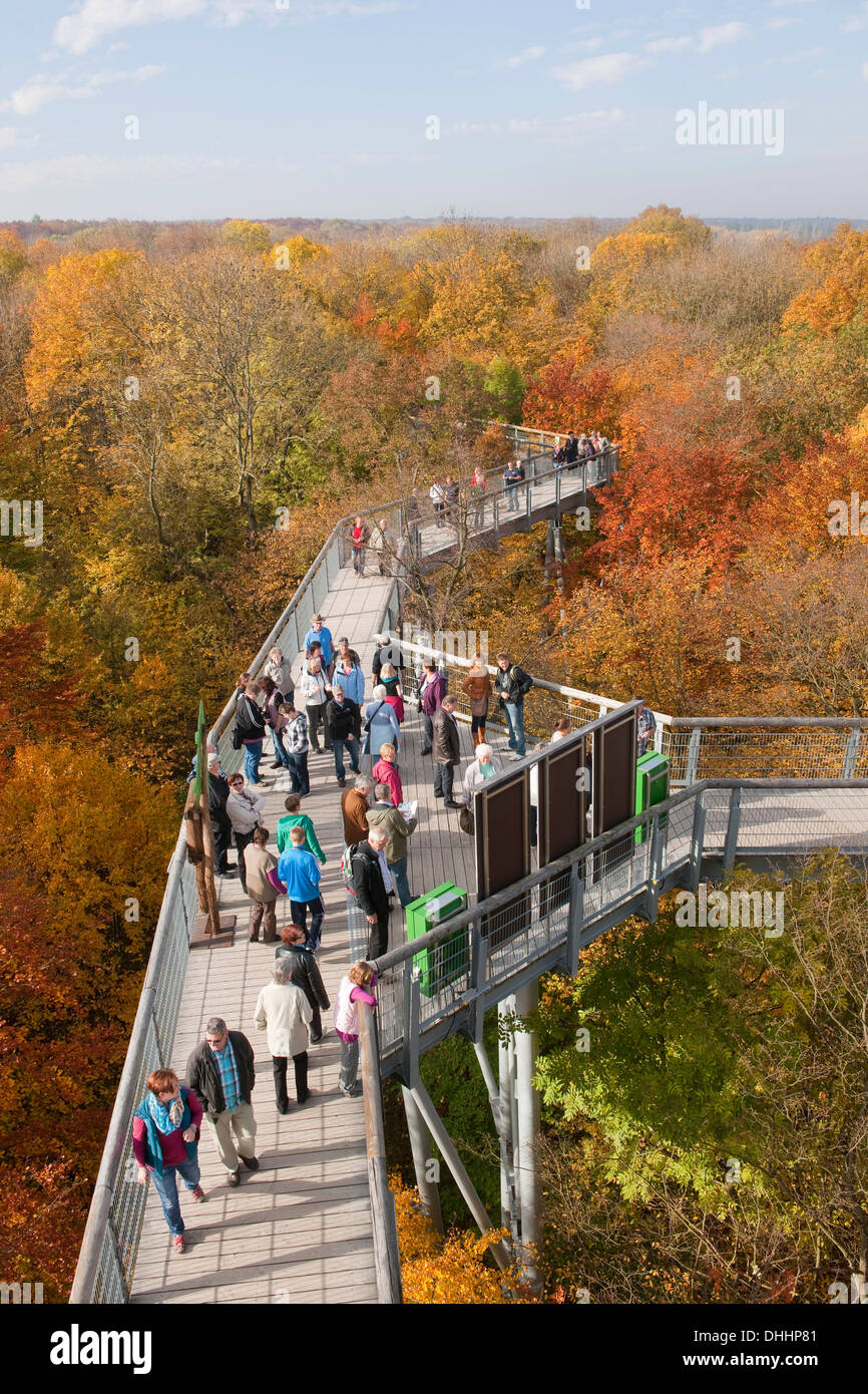 Treetop walkway through a forest in autumn, Hainich National Park, Thuringia, Germany Stock Photo