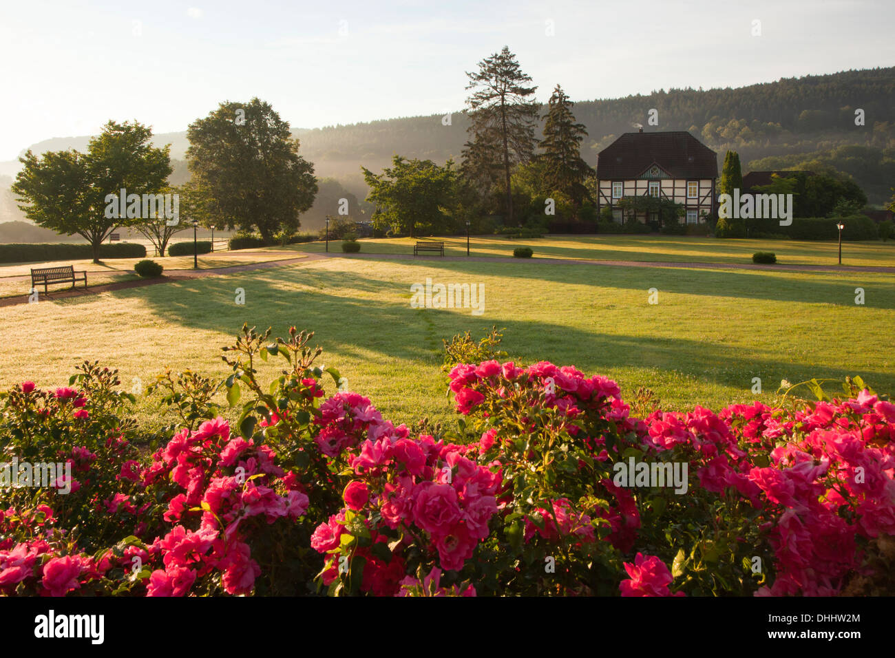 Roses at the gardens of Haemelschenburg castle, Emmerthal, Weser Hills, North Lower Saxony, Germany, Europe Stock Photo
