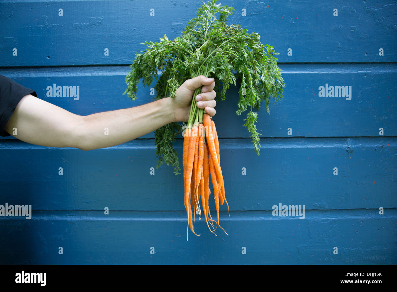 Man holding bunch of organic carrots - Stock Image