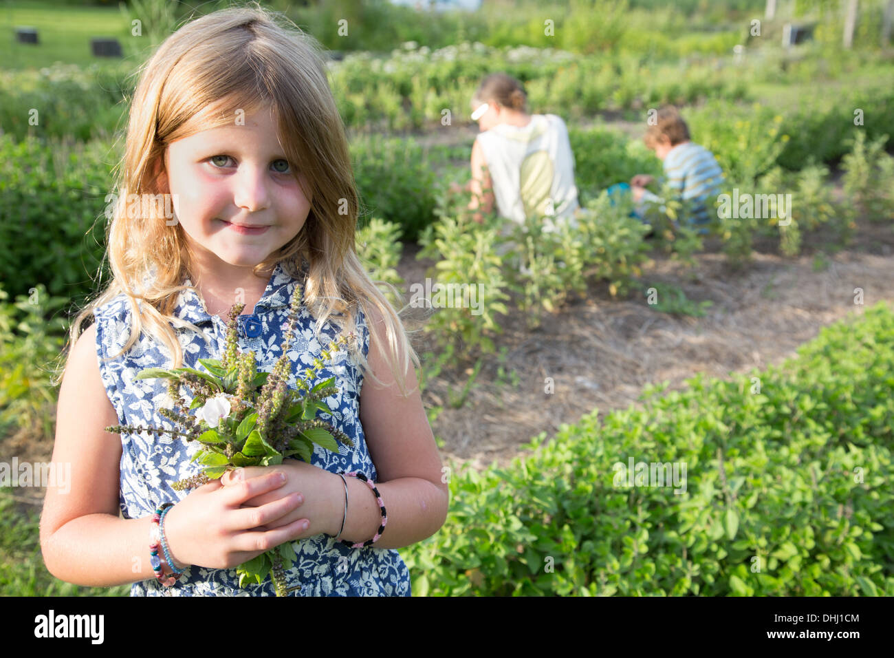 Portrait of girl holding bunch of foliage on herb farm - Stock Image