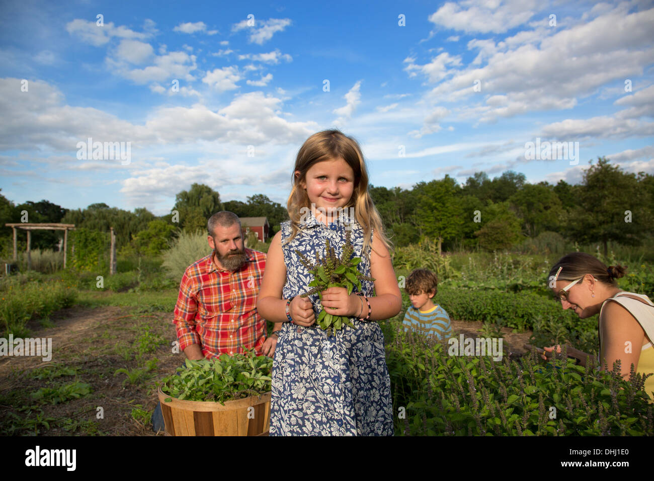 Portrait of girl holding bunch of leaves on family herb farm - Stock Image