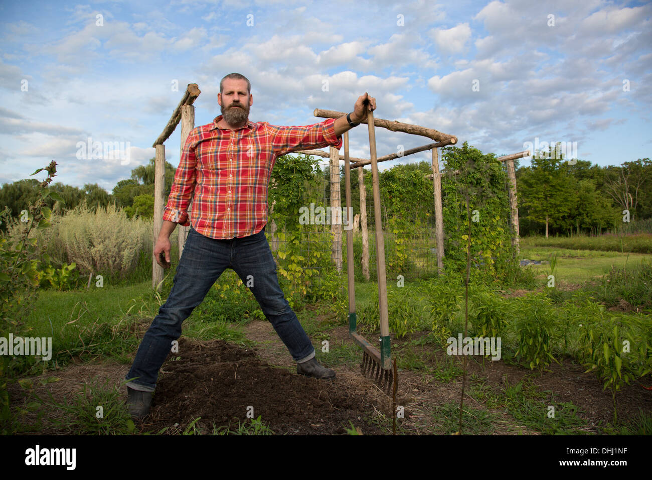 Mature man holding rake on herb farm - Stock Image