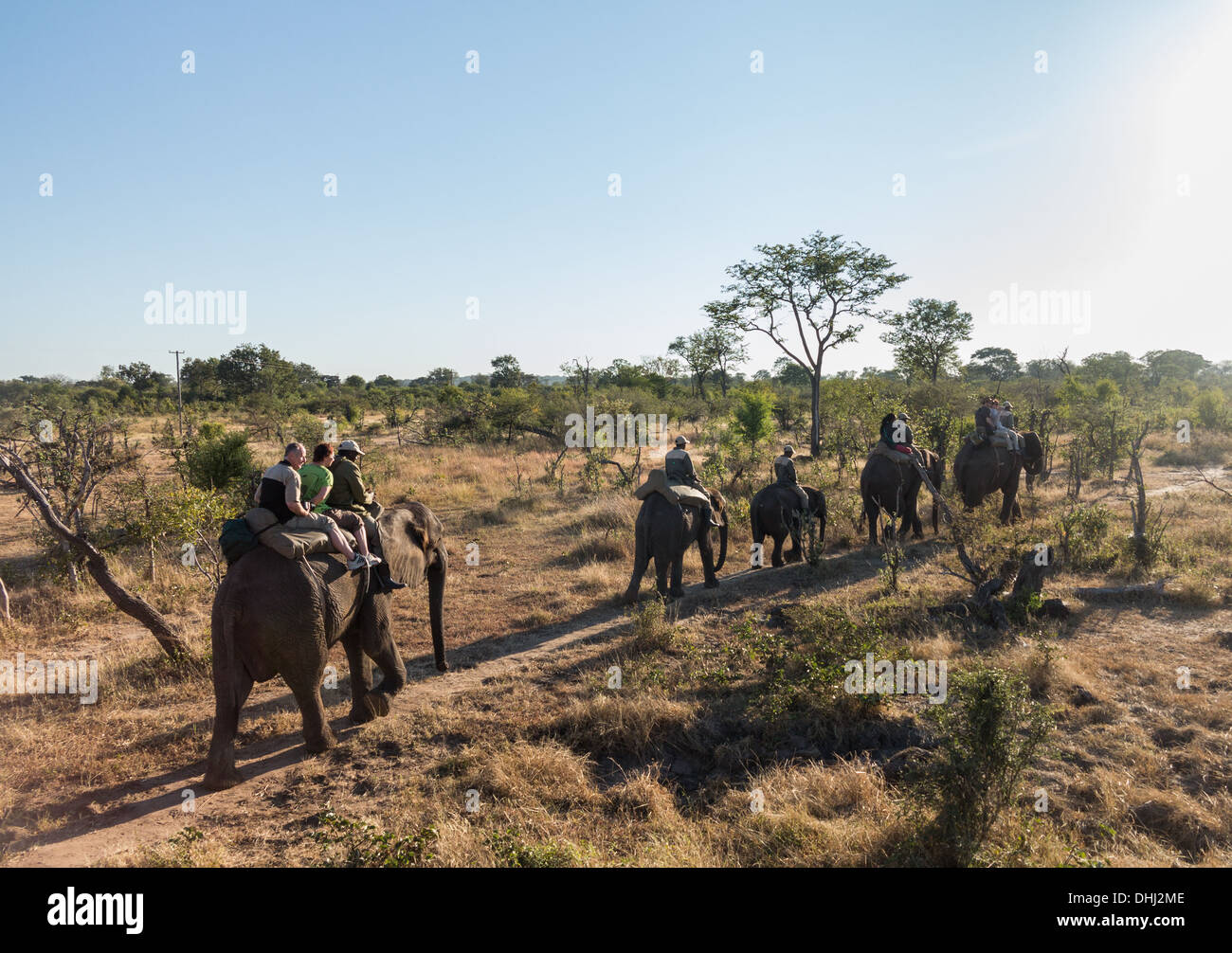 Tourists on Elephant safari, Zambia, Africa - Stock Image