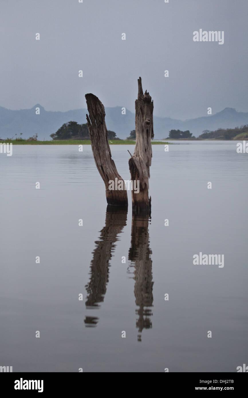 Tree trunks in Lago Bayano, an artificial lake, Panama province, Republic of Panama. - Stock Image