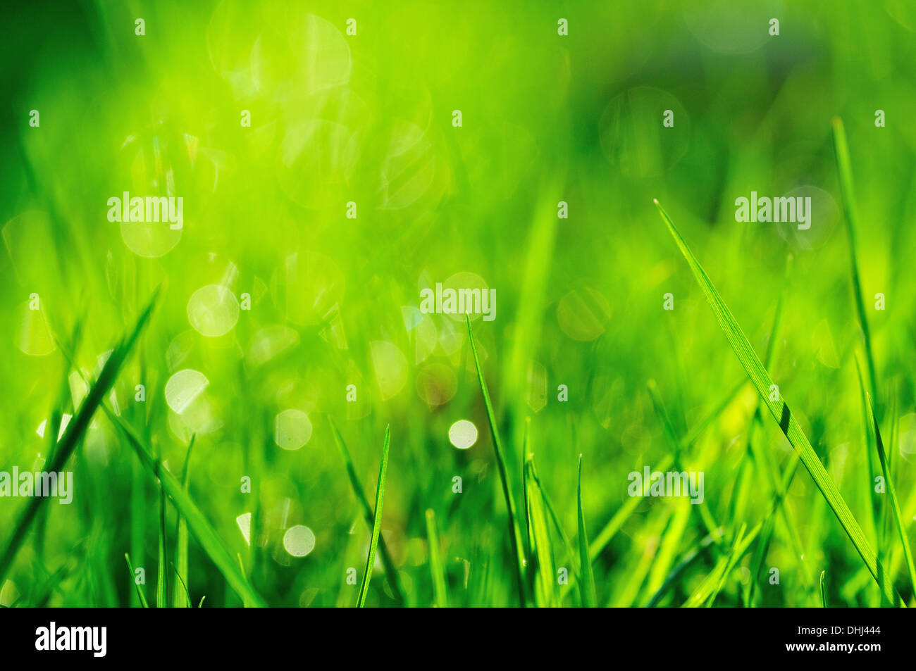 Closeup of green grass from ground level Stock Photo