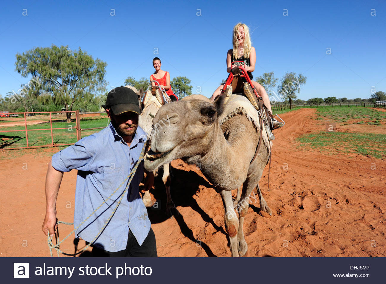 Tourists riding on camels, camel farm, Alice Springs, Outback, Northern Territory, NT, Australia - Stock Image