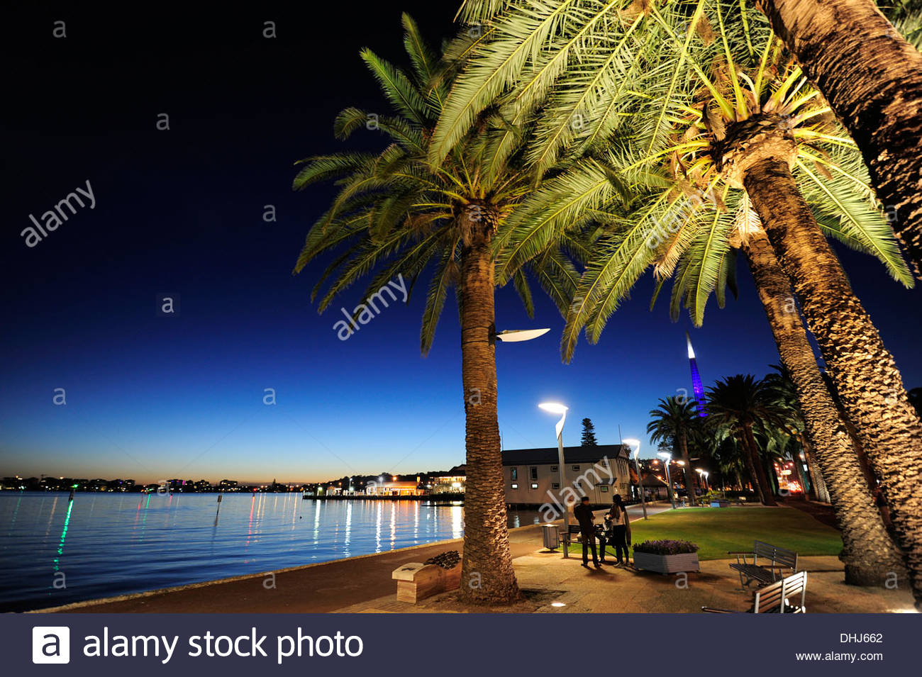 Palm trees between Swan River and Riverside Drive in the evening, Central City Area, Perth, Western Australia, WA, Australia - Stock Image