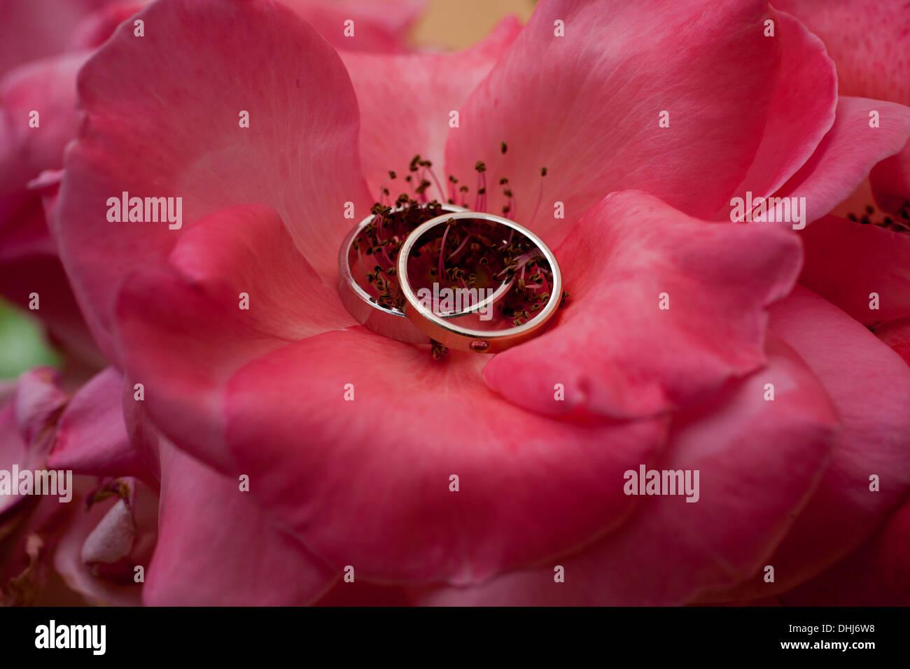 Wedding Rings Flower Leaf Texture Stock Photos & Wedding Rings ...