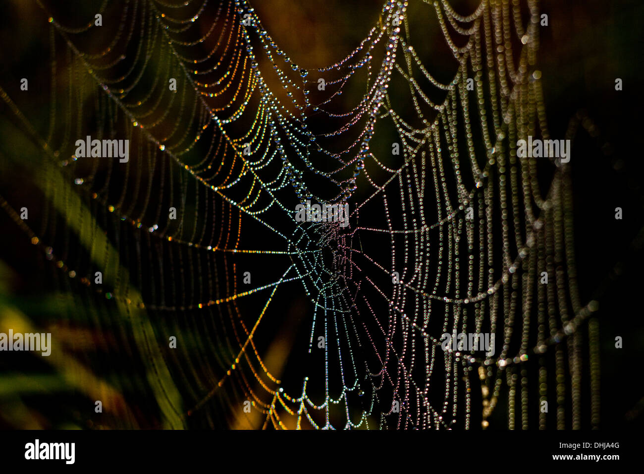 A dew laden cobweb sparkling in the morning sun showing the colours of the spectrum - Stock Image