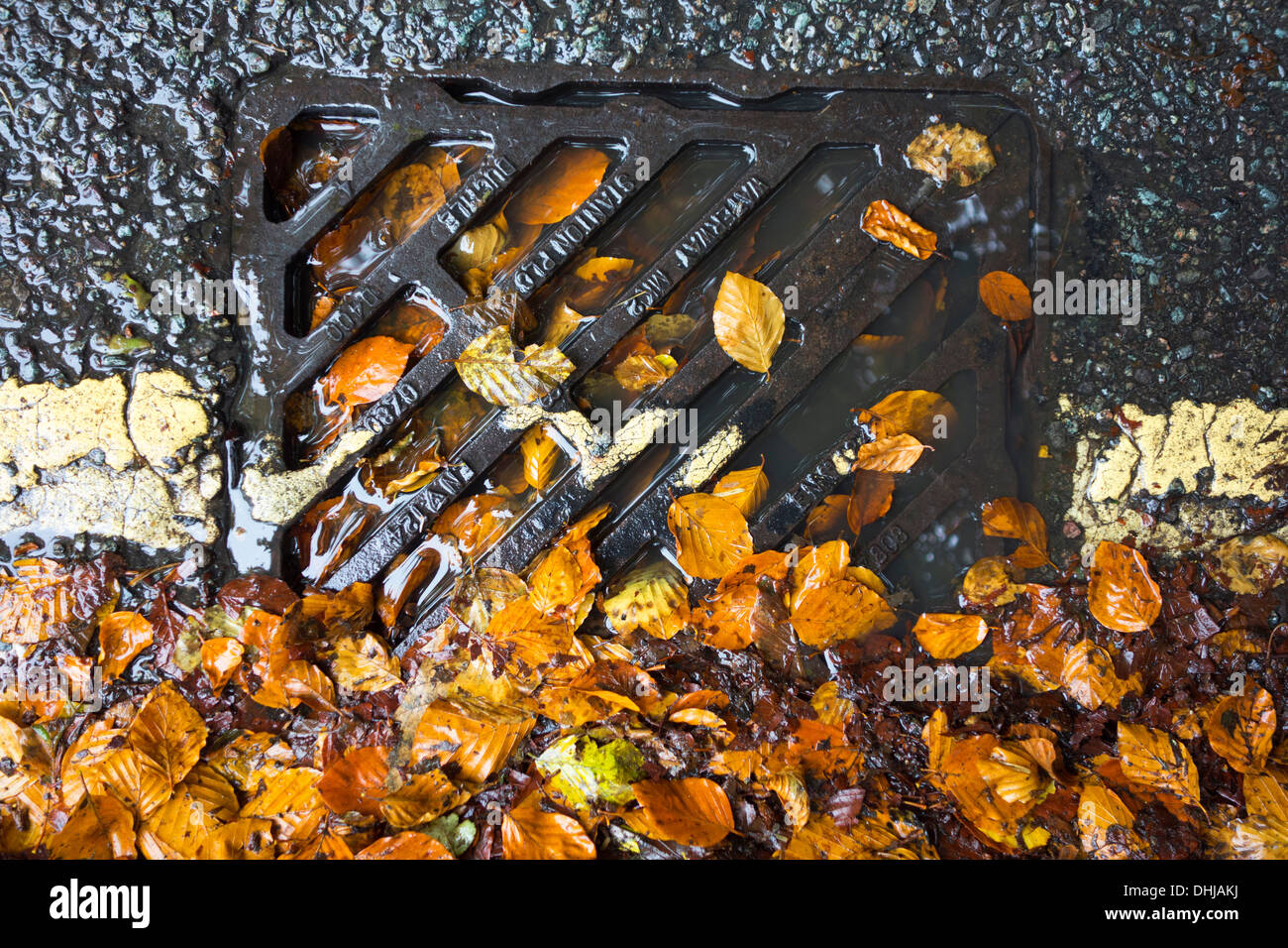 A drain blocked with fallen leaves. Stock Photo