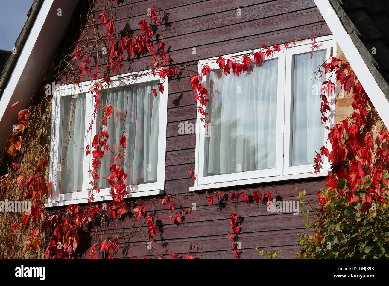 British house with glass windows and autumn leaves Stock Photo