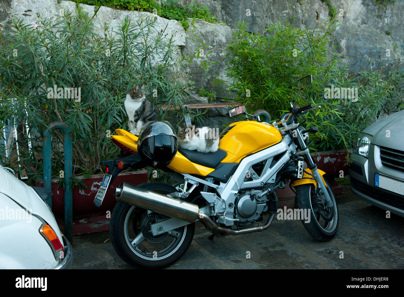 Cats sit on a yellow motorcycle in Sorrento, Italy. - Stock Image