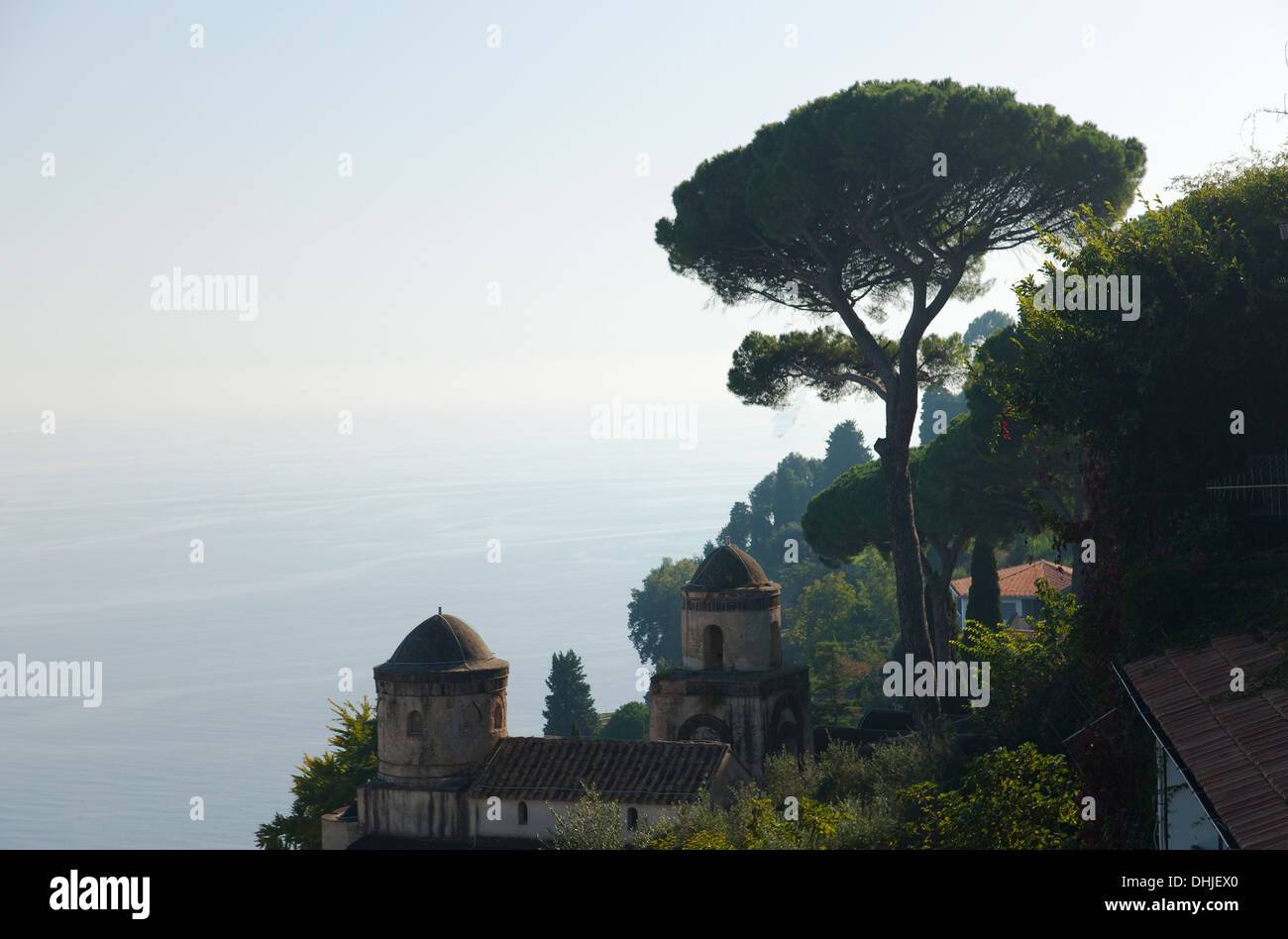 An iconic canopy pine tree stands on the Amalfi Coast, Italy. - Stock Image