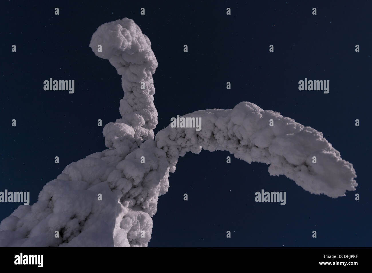 snow covered spruces in moonlight, Sweden - Stock Image