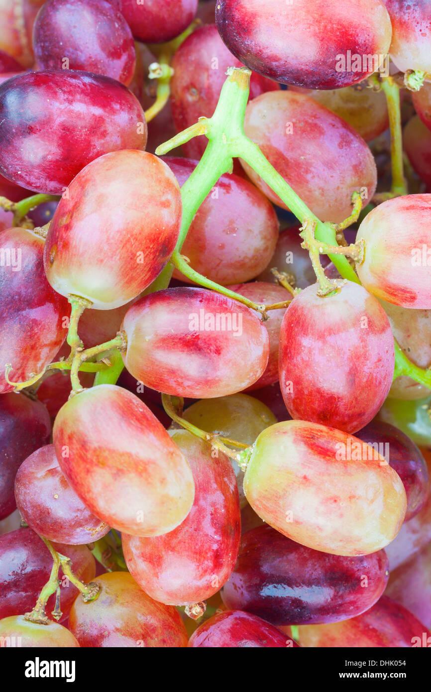 Crimson grapes - Stock Image